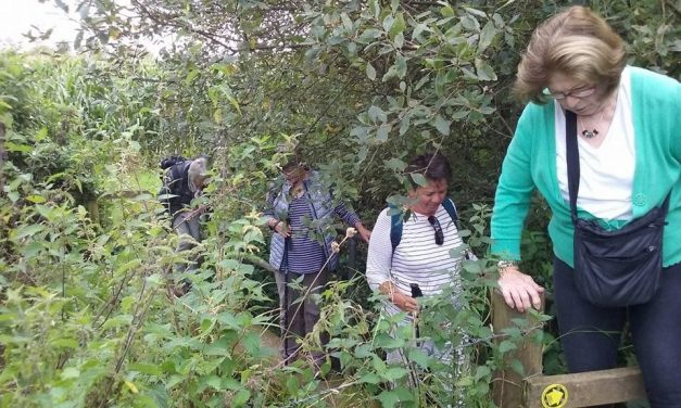 The Living Tree Amblers' Group in Action, Summer 2017