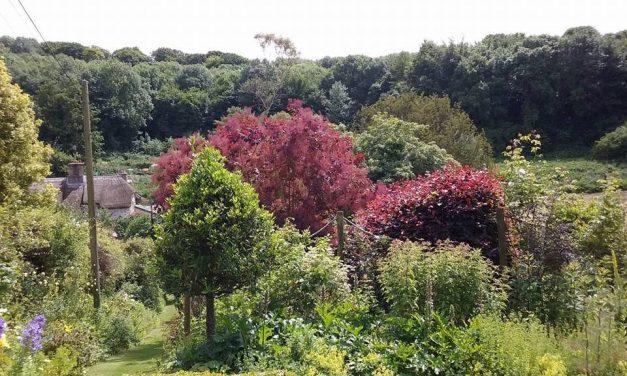 Living Tree Amblers – Walks in  the Bridport Area